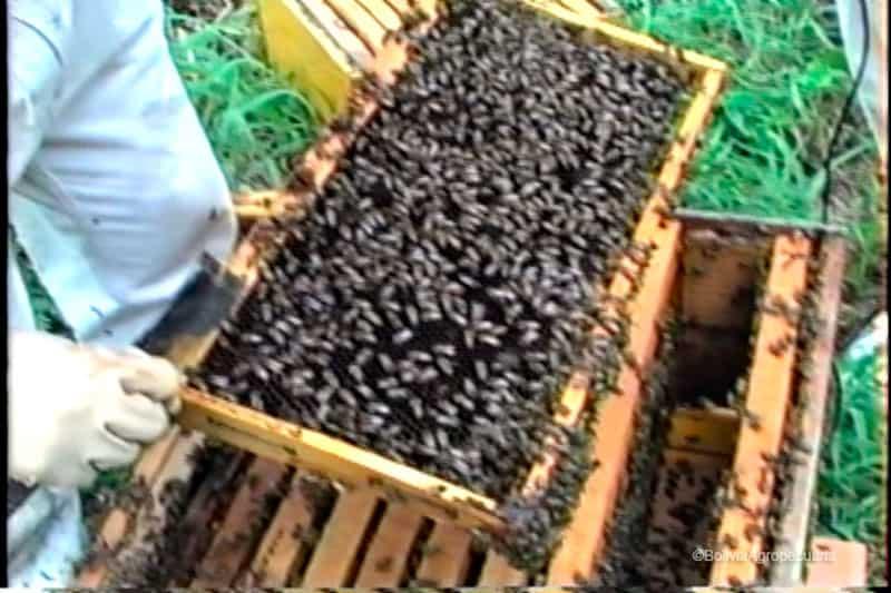 Abejas Yungas